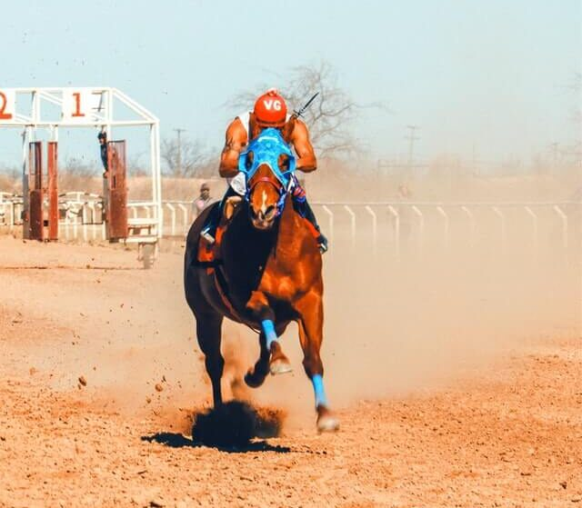 guindy horse race betting game