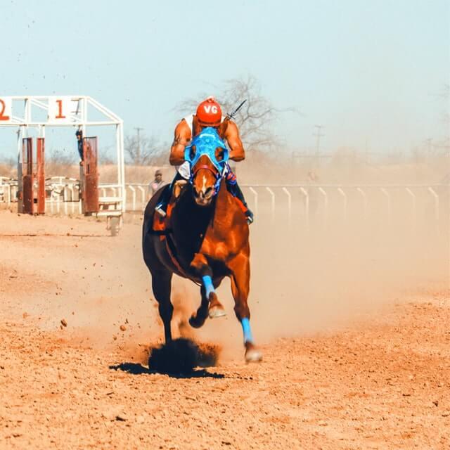 Horse Sprinting on a sandy field